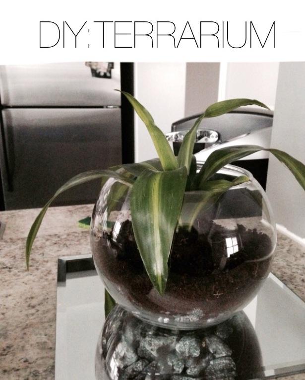 DIY:Terrarium